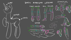 Basic Pony Anatomy