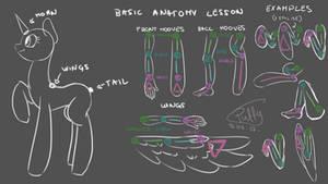 Basic Pony Anatomy