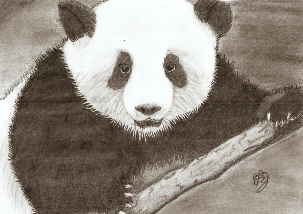 oso panda by schifferdarkness19 on DeviantArt