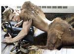 Bison Boy