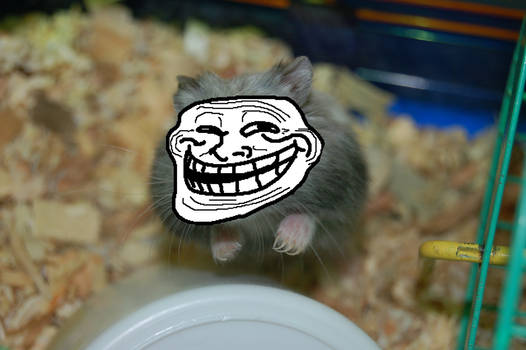 Hamster? Man? You be the judge