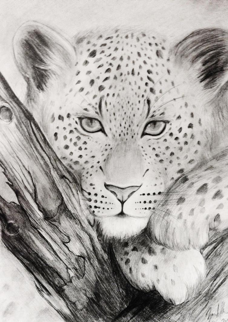 Leopard by Kitimisu