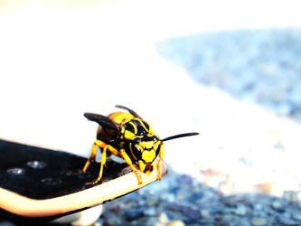 Bumblebee by xXOnlyAubsiiXx