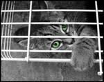 ..::Caged::..