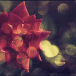 roses_