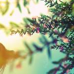 Rainbow Veins