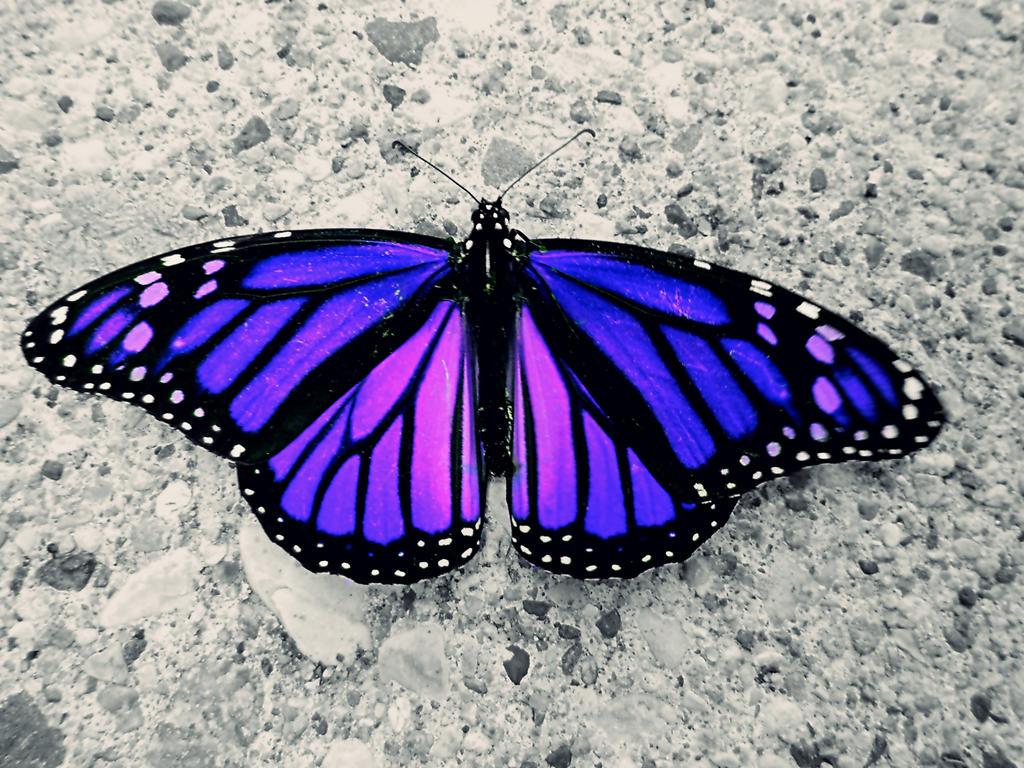 Majestic Wings by XxDarkbutterflyxX
