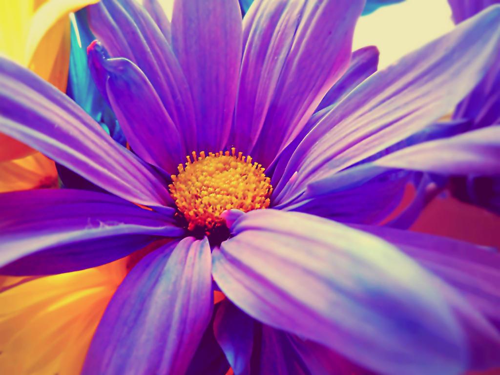 Spiritual Flower by XxDarkbutterflyxX