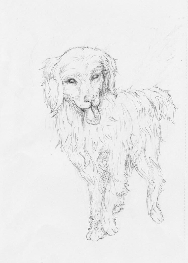 Line Drawing Golden Retriever : Golden retriever line sketch by d mowmow on deviantart
