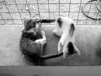Kittens by FrankPayne