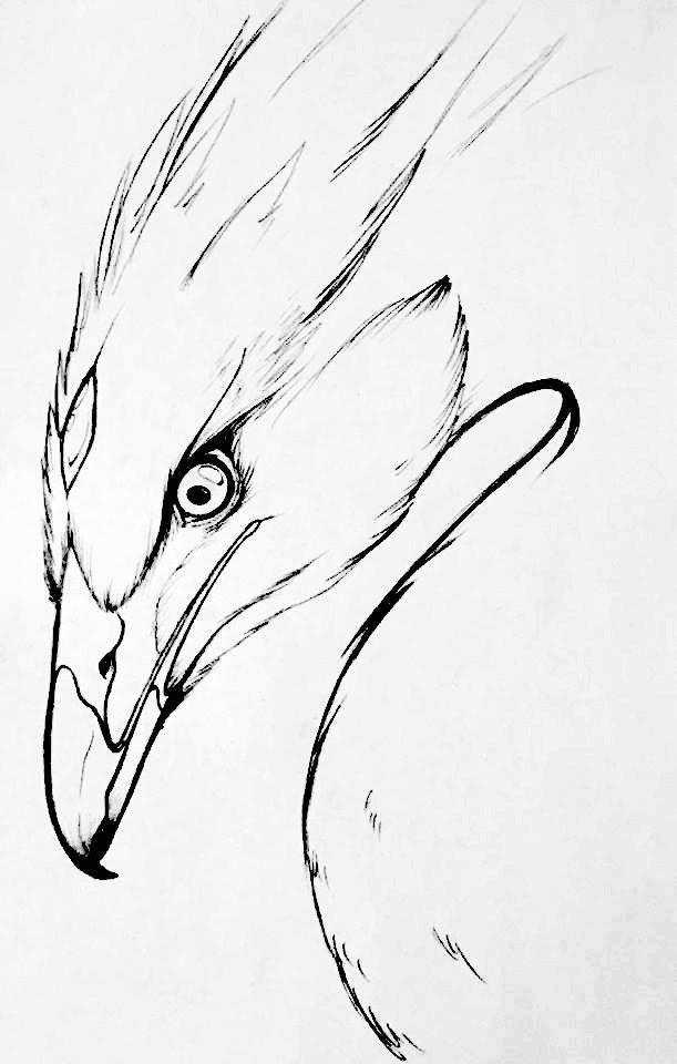 how to draw a phoenix head