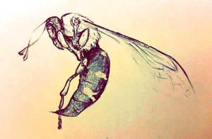 Cicada Hawk