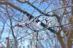 Little sakura
