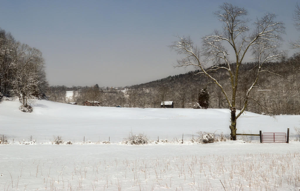 A Pasture in Winter by TimLaSure