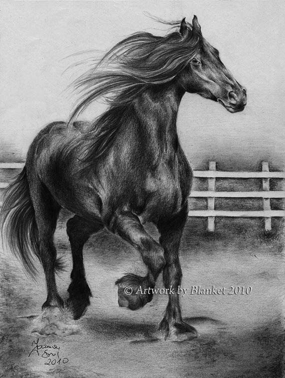 BLACK HORSE by blanket86
