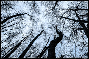 Synapses of Nature