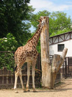 zoo collection 4 by mayah-stock