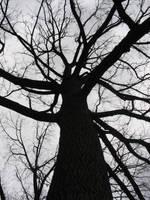 tree by mayah-stock