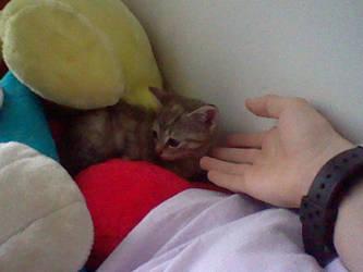 Cute Kitten 1 by Tinyduck