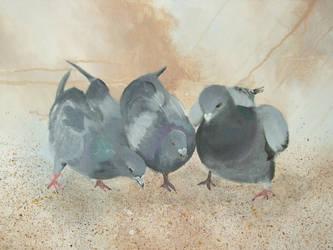 3 pigeons by seiltje1