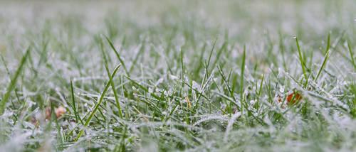 Frozen grass 21:9 uwhd wallpaper