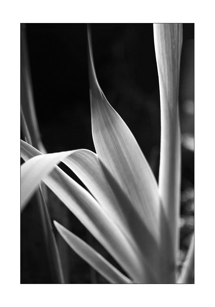 Iris I by DaBorgne