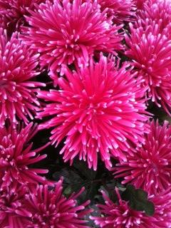 ho beautiful flowers by tamirk10