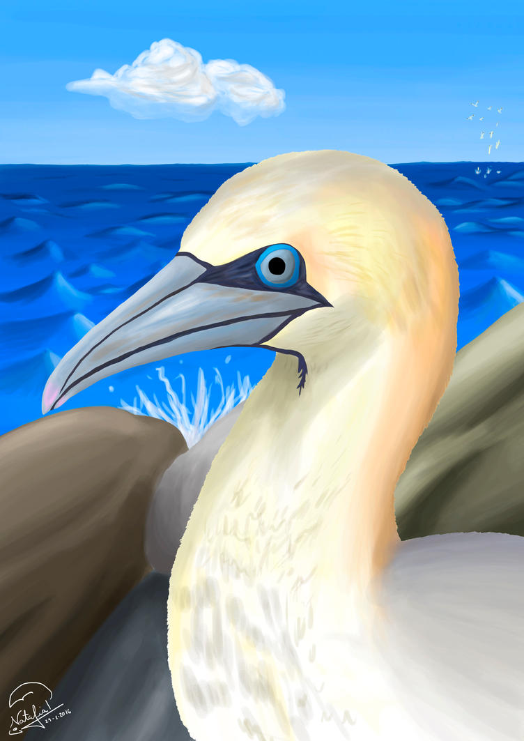Northern Gannet by Dino-drawer