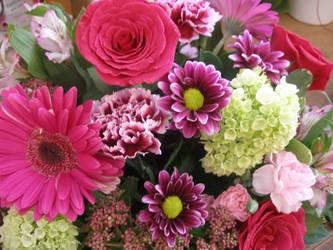 Hot Pink Profusion by ArtisticAdventures