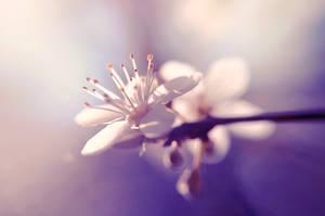 La primavera by eulalievarenne