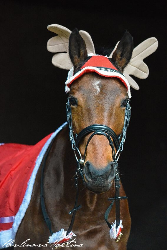 Christmas horse by martinahavlinova