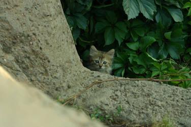 Isn't he look like a cheetah? by MBdrawings
