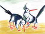 Crested Sandgrazers