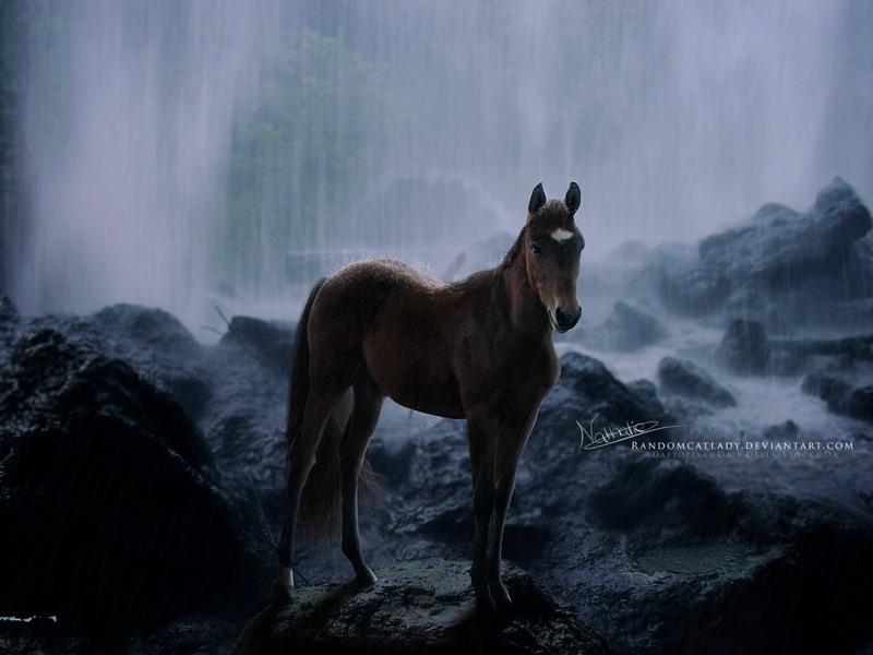 Lone Ranger by RandomCatLady