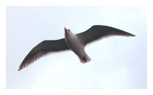- Flight -