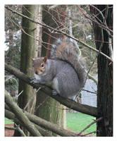 - My Friend, the Squirrel -