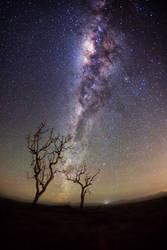 Stardust Aurora