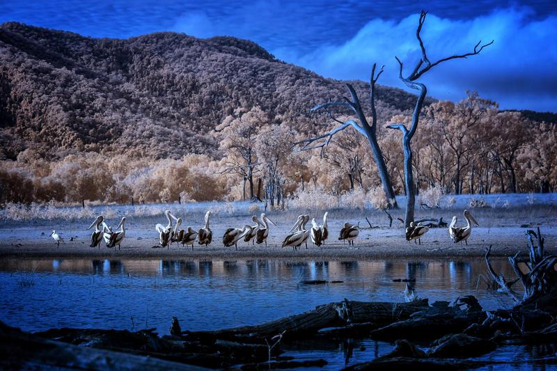 Pelican Bay IR by Questavia