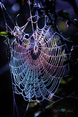 Iridescent Web by Questavia