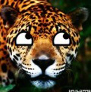 davilo1996's Profile Picture