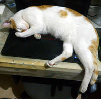 Lapcat by purbosky