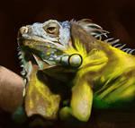 Iguana Study by ImRachelBradley