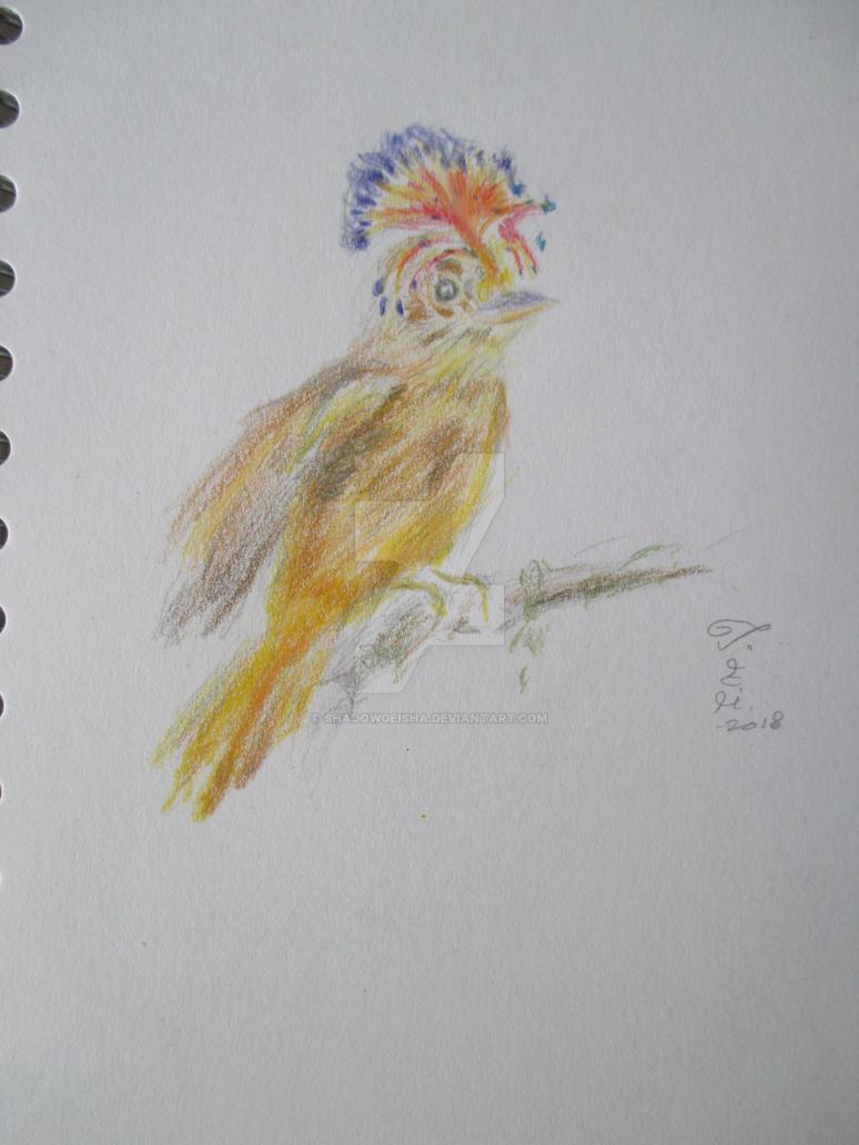 Amazonian Royal Flycatcher by shadowgeisha