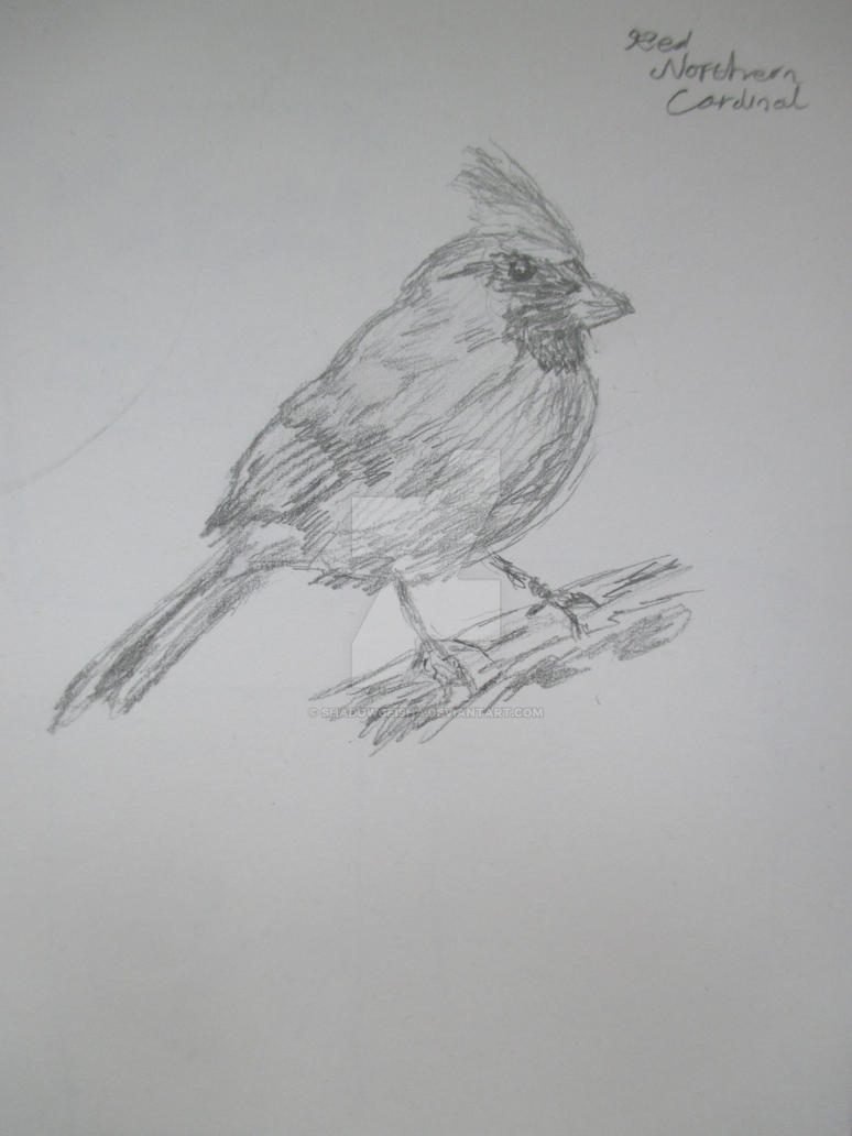 Northern Red Cardinal by shadowgeisha