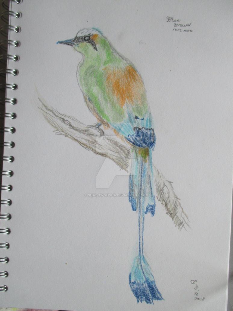 Turquoise- Browed Motmot by shadowgeisha