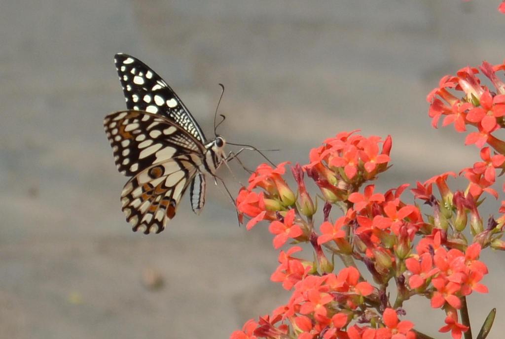 Nectarilicious by RiyaBorah