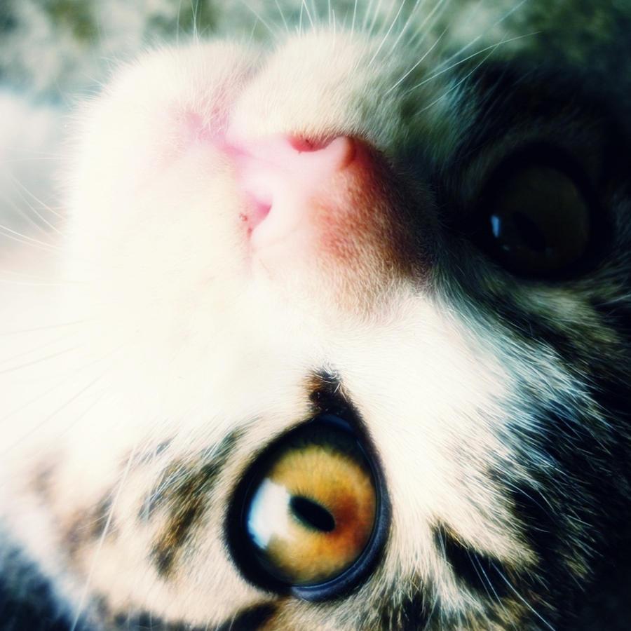 Cat's Eye by xXHizumi-loverXx