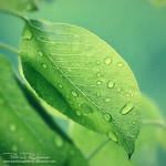 deliciousgreen