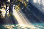 rays of dew