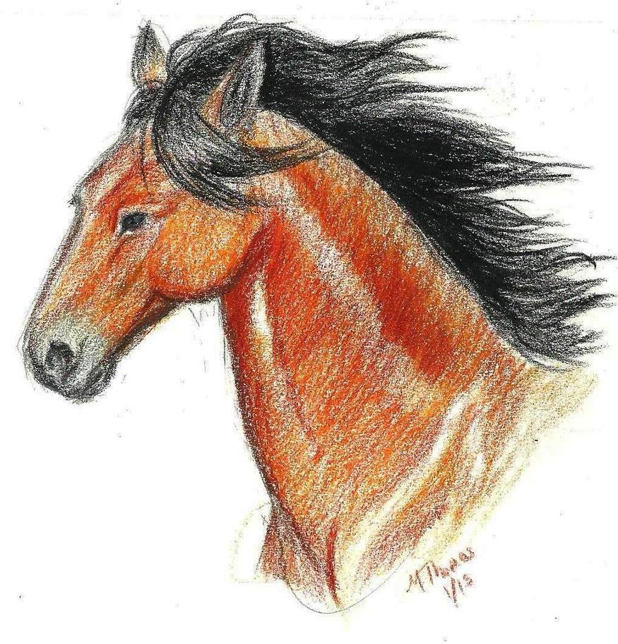 Horse practice by miro-kaisou
